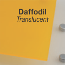 DAFFODIL_TRANSLUCENT